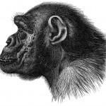 ape_profile