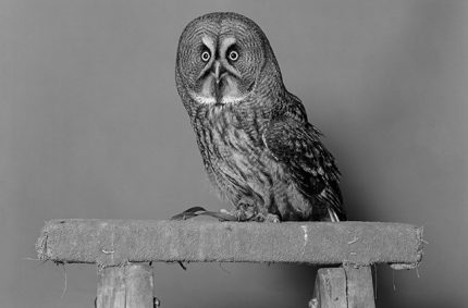 Jack Latham – Parliament of Owls